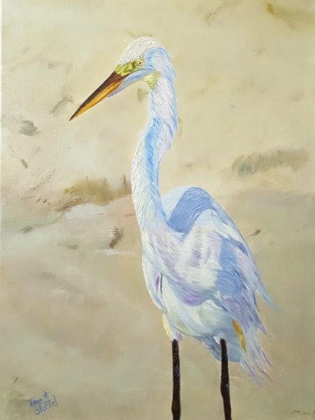 Boca White Egret