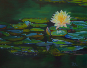 Water Lily Pond11 x 14 Art Prints